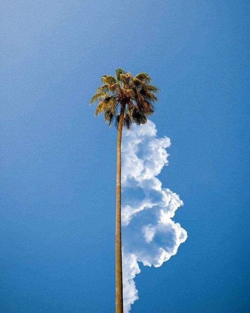 cloudpalm