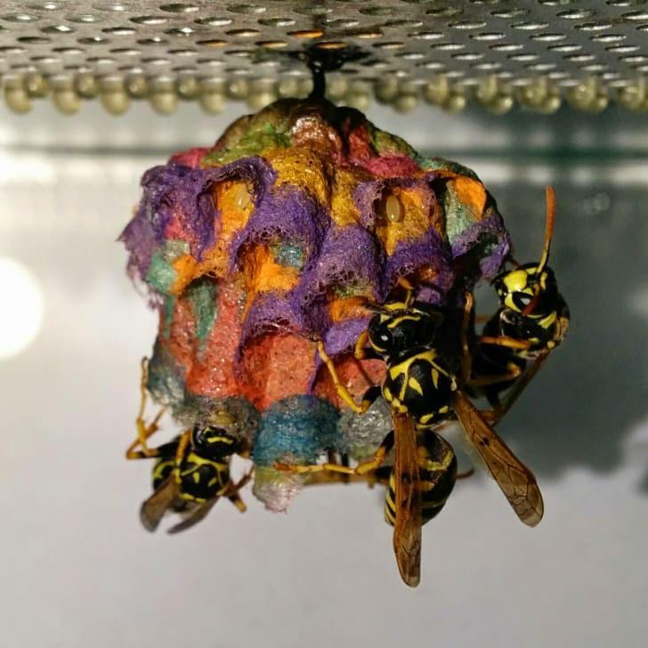 Gay Wasps